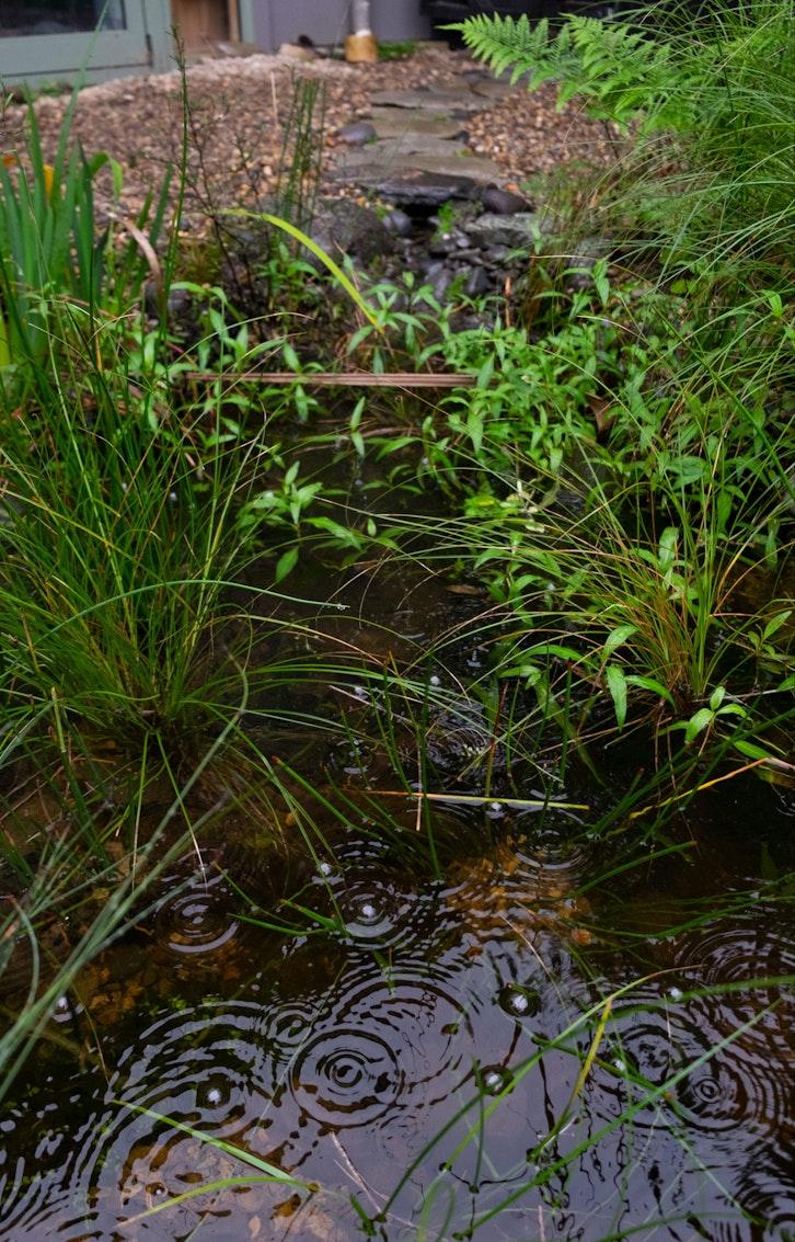 Pond judkins