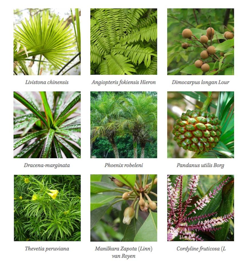 Shenzen 1000 Pictures Plantpalette0