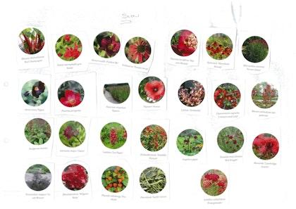 Plant palette cutout 1