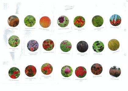 Plant palette cutout 2