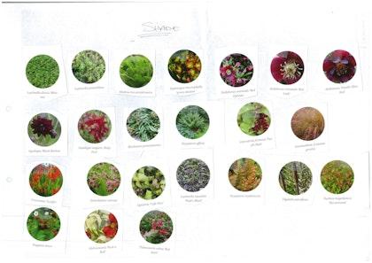 Plant palette cutout 3