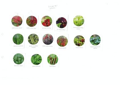 Plant palette cutout 4