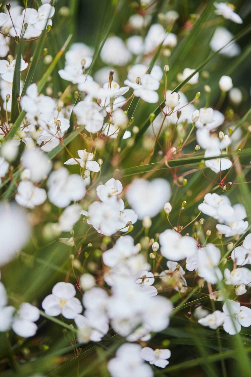 N Woo Heather Garden 6 Nov20 0151web