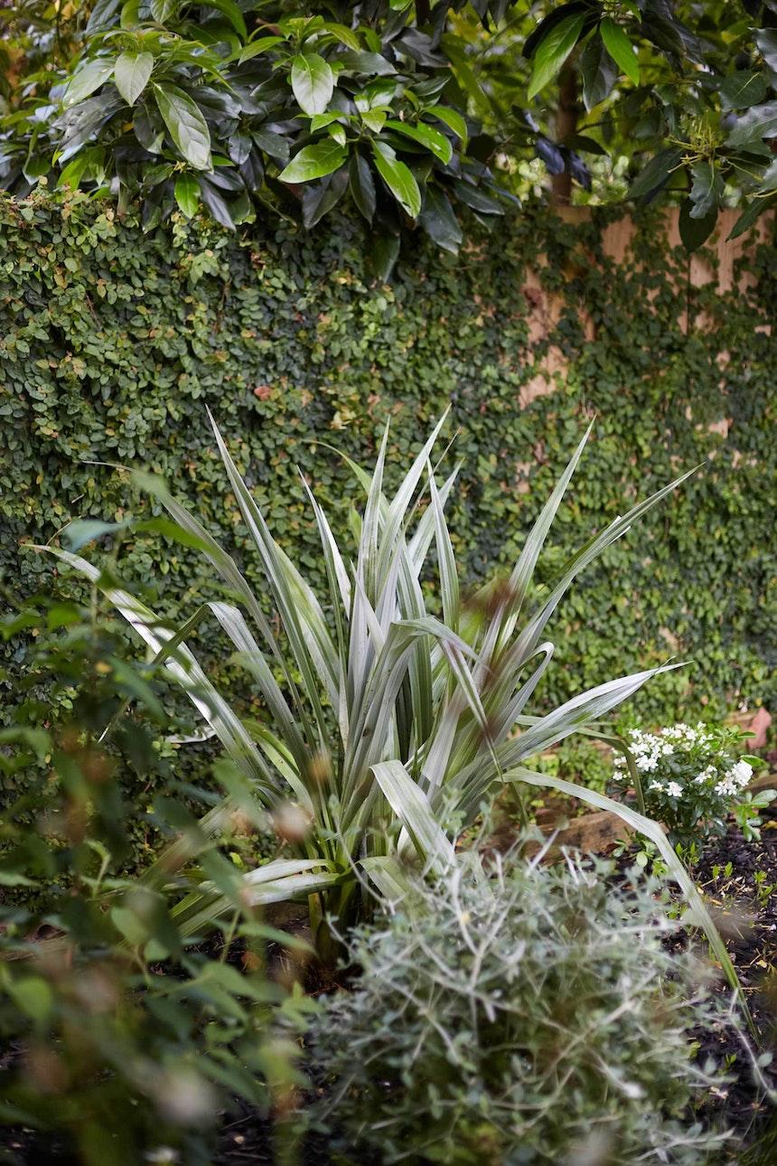 N Woo Heather Garden 6 Nov20 0289web