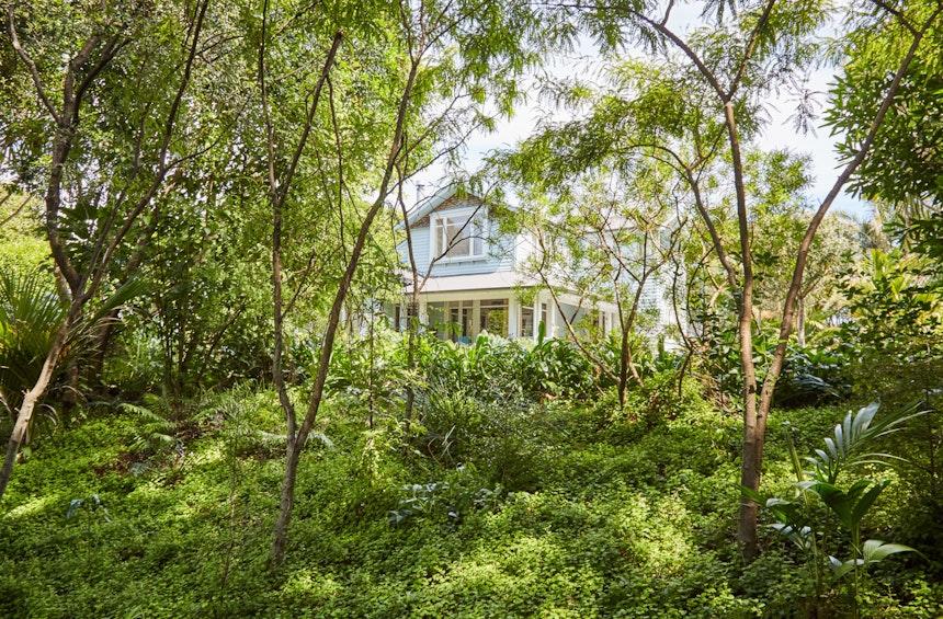 XWD Maungawhau Forest 19 web