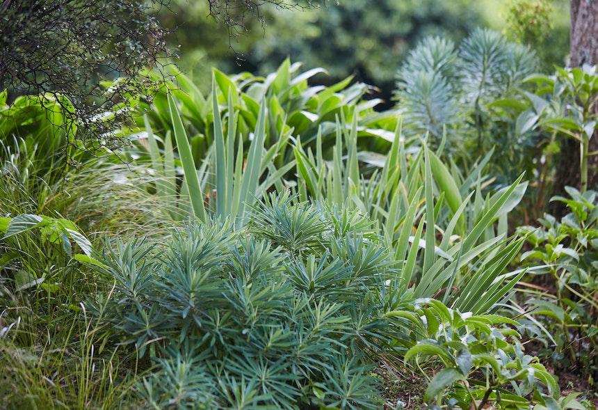 XWD Maungawhau Forest 336 web