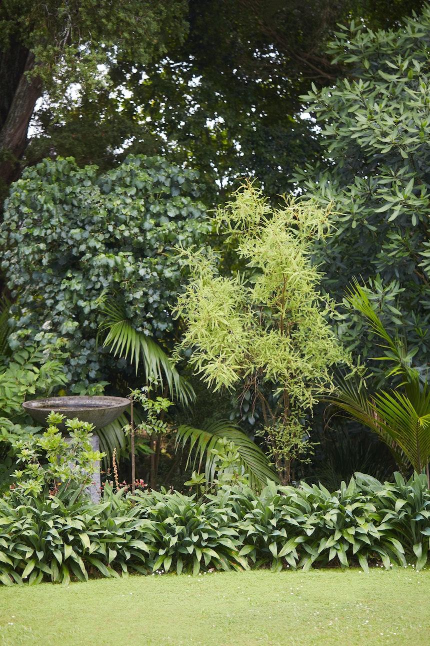 XWD Maungawhau Forest 362 web