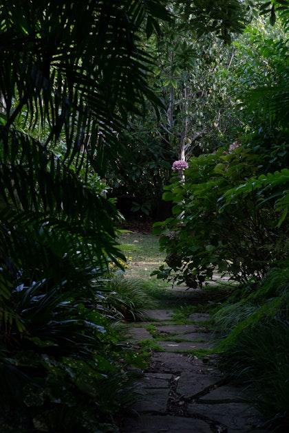 XWD Maungawhau Pathways 105 web