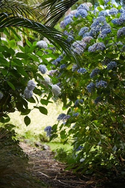 XWD Maungawhau Pathways 323 web